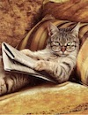 DMC Reading