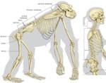 lumbar-spine