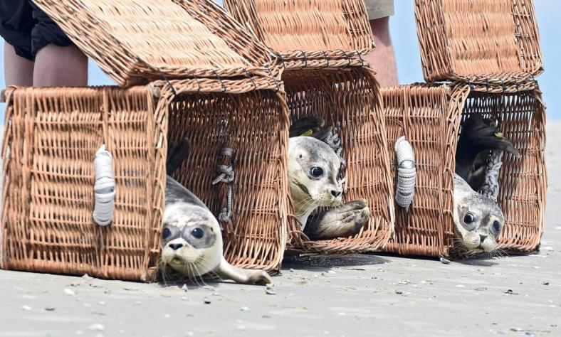 release-young-seals-wild