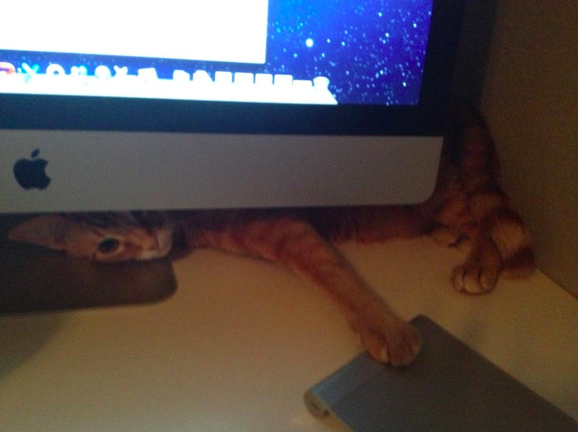 Johnny Cat wants to write his memoir...