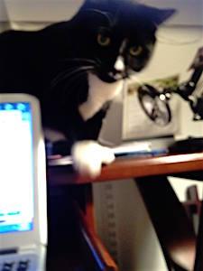 Zoe eyeballing the laptop