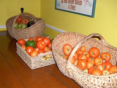 Blog - tomato harvest