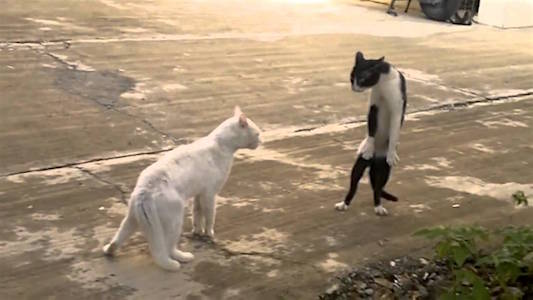 funny-wht-and-blk-wht-cat-face-off