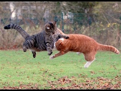 two-cats-in-the-air