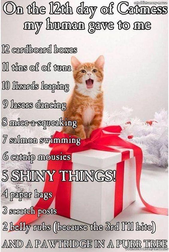 12-days-of-catness