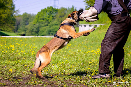 Top Ten Dog Training Mistakes – Guest post by Blogger Kevin Davies