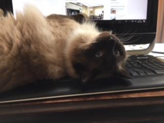 Murphy keyboard 3