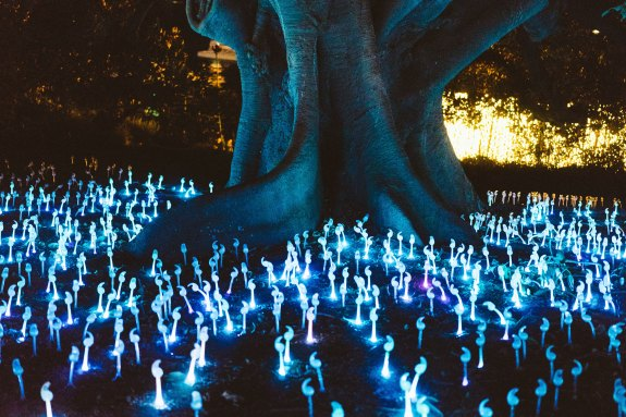 Glowing mushrooms dark tree_jay-ma-304046