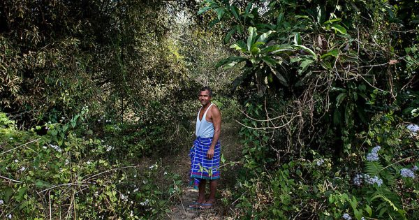 Payeng in the forest named after him.
